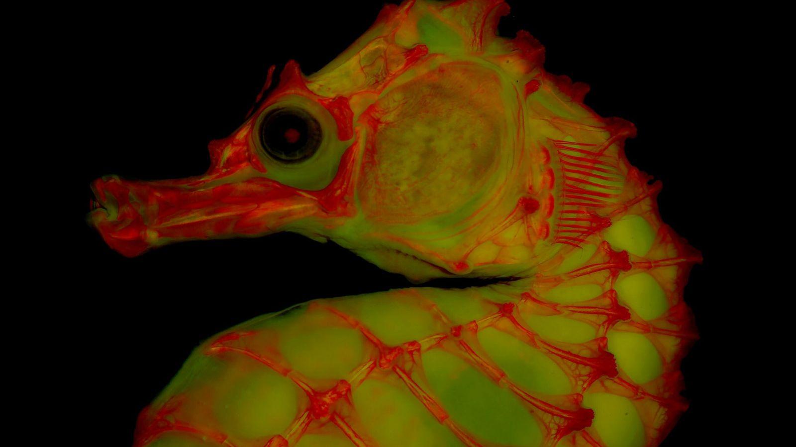 vertebrate-skeletons-6