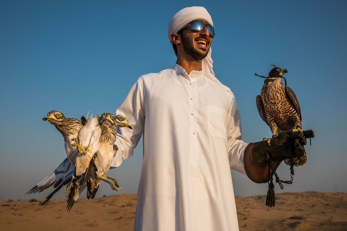 A member of the Dubai royal family dons protective leather gloves to train a falcon.
