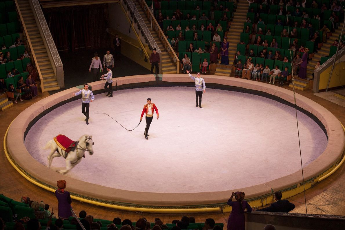 A horse gallops around a circus ring in Ashgabat. Training animals to perform tricks for entertainment ...