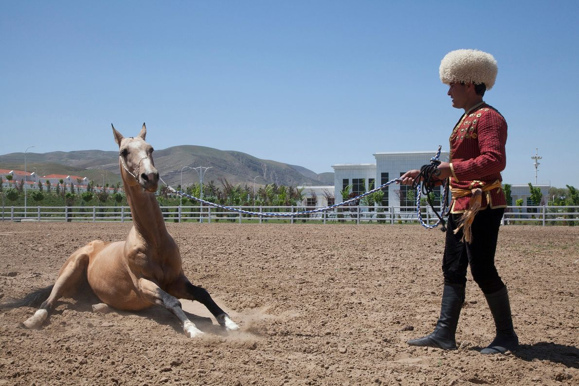 A handler waits for his horse to stop rolling at an Akhal Teke breeding facility in …