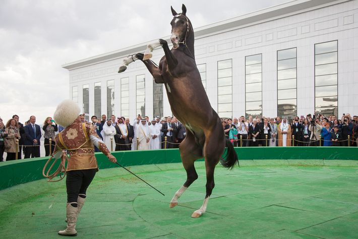 A man performs a trick with an Akhal Teke horse during a performance for international audience ...