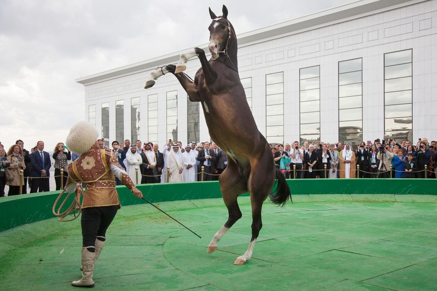 A man performs a trick with an Akhal Teke horse during a performance for international audience at the Ashgabat convention centre. Training animals to perform tricks for entertainment has received widespread backlash from animal activists in recent years.