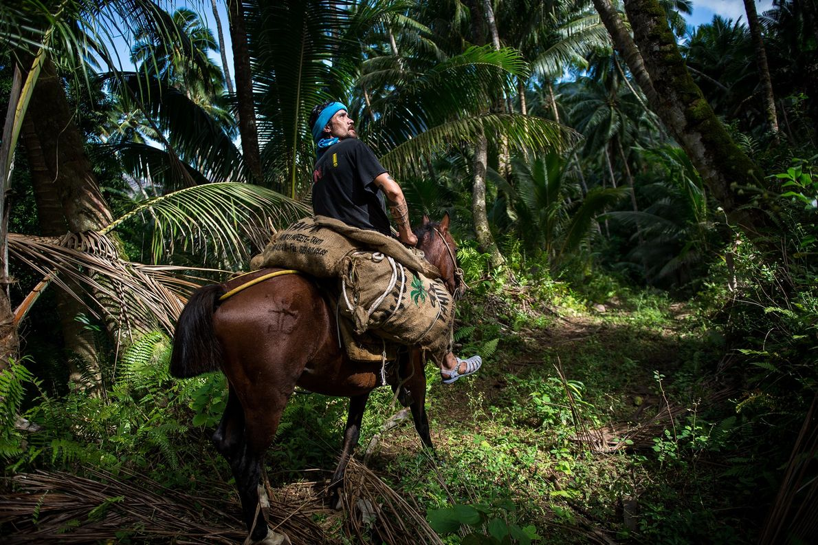Like many islanders, Vohi makes a living in the copra industry and uses his horse to ...
