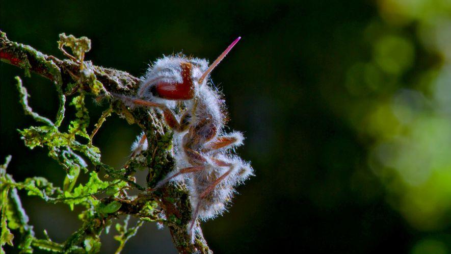 hostile-planet-cordyceps-fungi-ant-graveyard-animals_uk