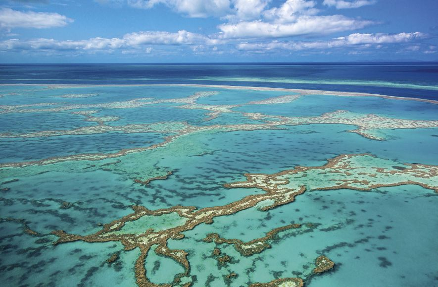 Hot topic: can we save the Great Barrier Reef?