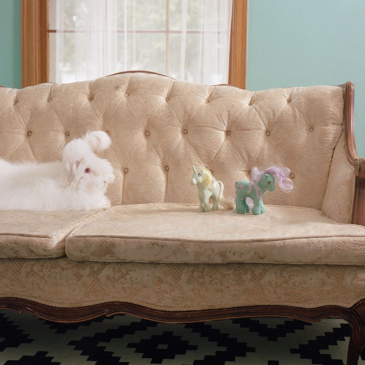 Finnian, an Angora rabbit (posing here on the couch), shares the house with two other Angoras. ...