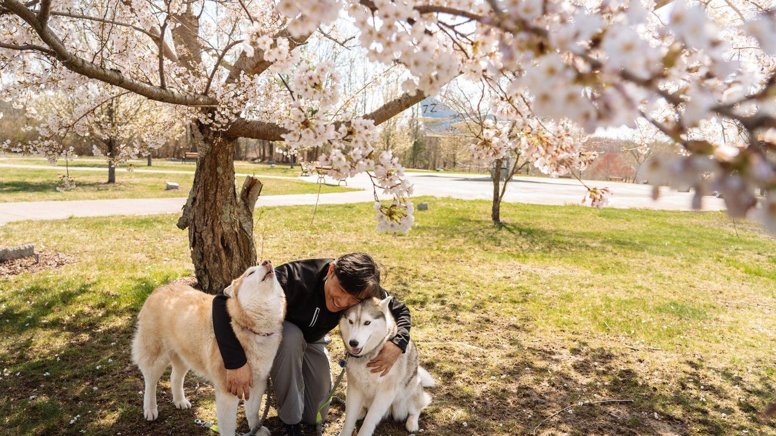pandemic pets Massachusetts dog