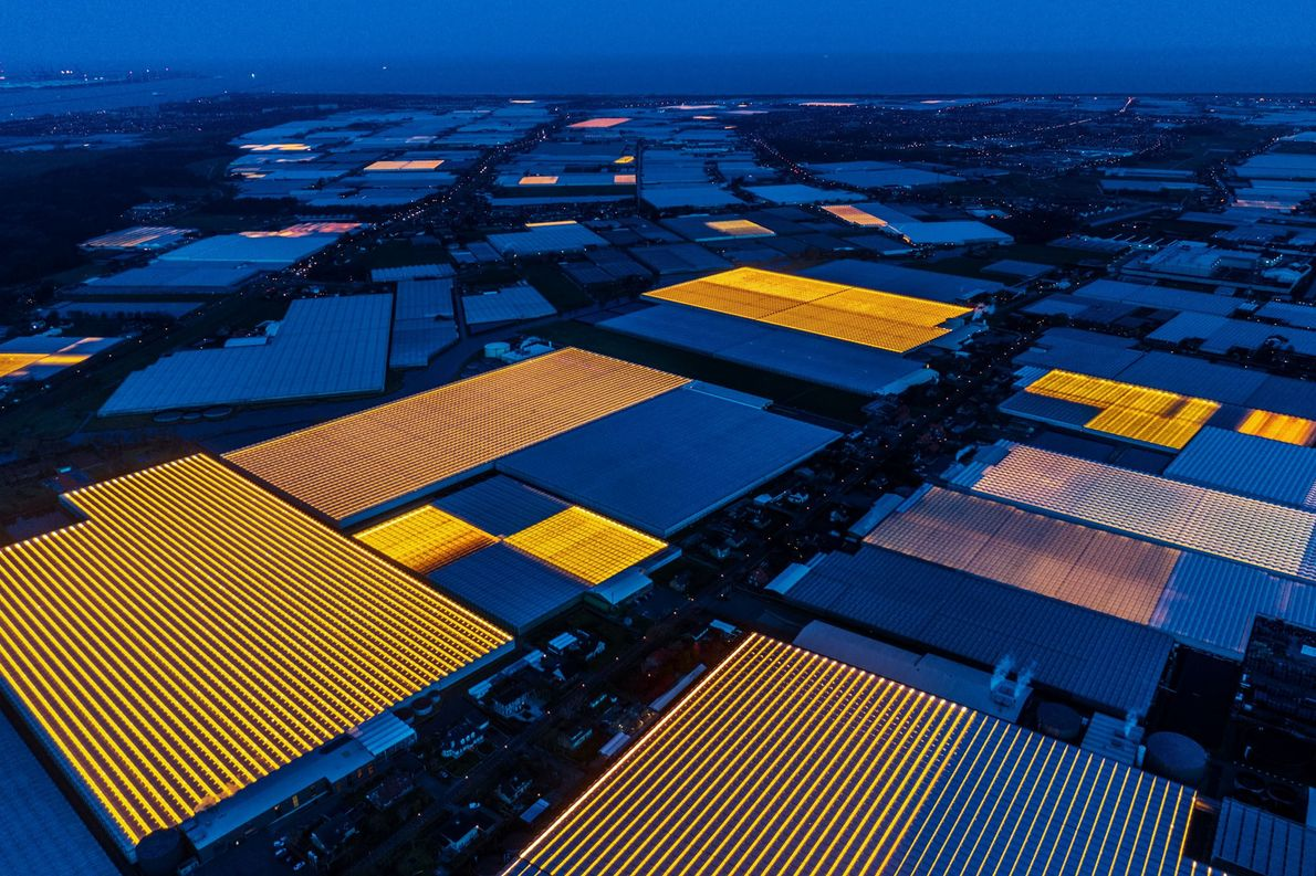Furrows of artificial light lend an otherworldly aura to Westland, the greenhouse capital of the Netherlands. …