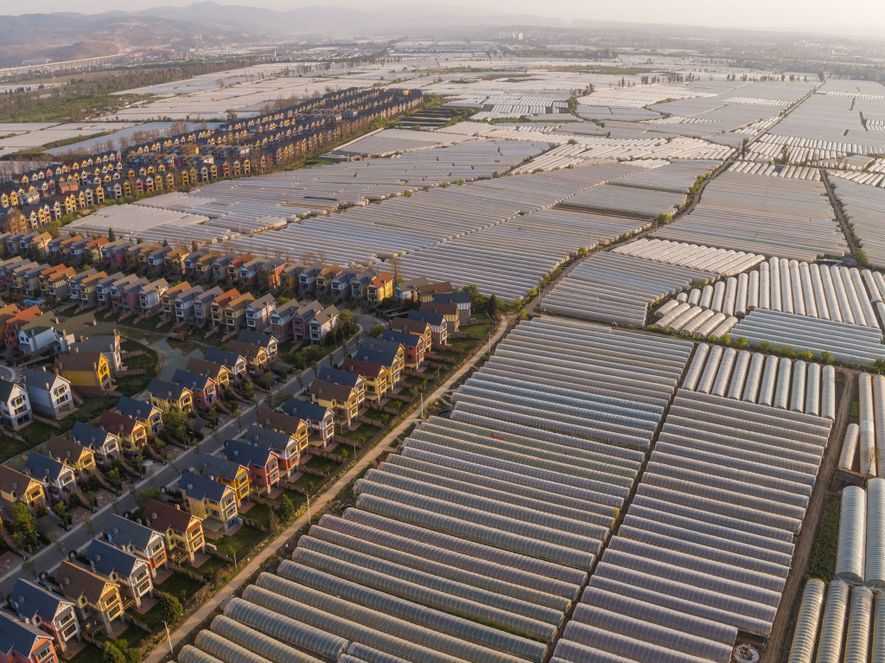 Side by side with suburban housing just north of Kunming in Yunnan Province, these greenhouses grow ...