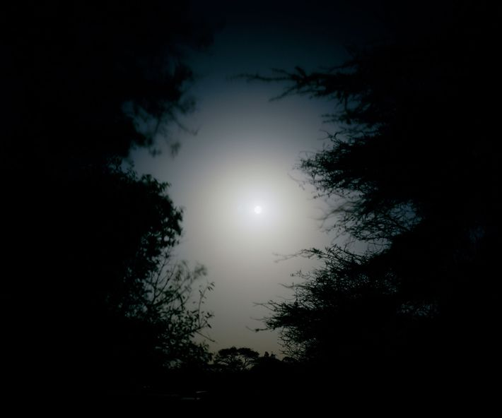 """A """"hunter's moon"""" hangs over Mpus Kutuk Community Conservancy in northern Kenya. Poaching activity increases significantly ..."""
