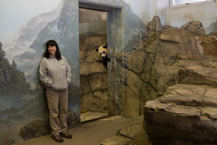 Laurie Thompson, assistant curator of giant pandas at Smithsonian's National Zoo in Washington, D.C., photographed with ...