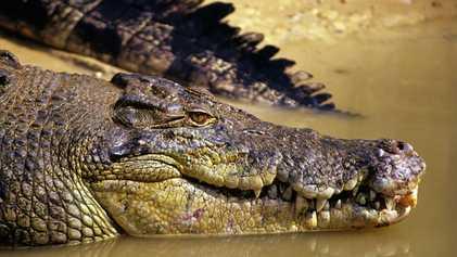 Australia: Swimming with crocodiles