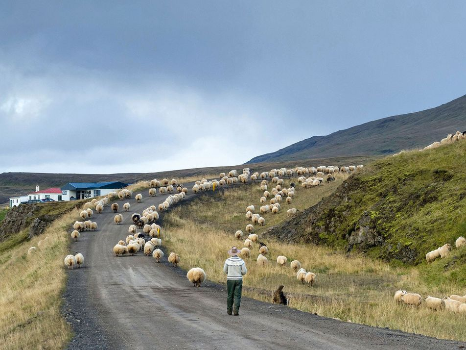 Stories from the Arctic Coast Way, Iceland's epic new road trip