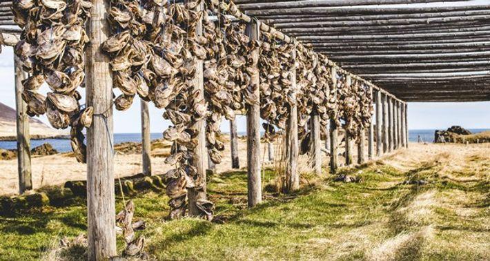 Dried cod heads, Borgarfjörður Eystri