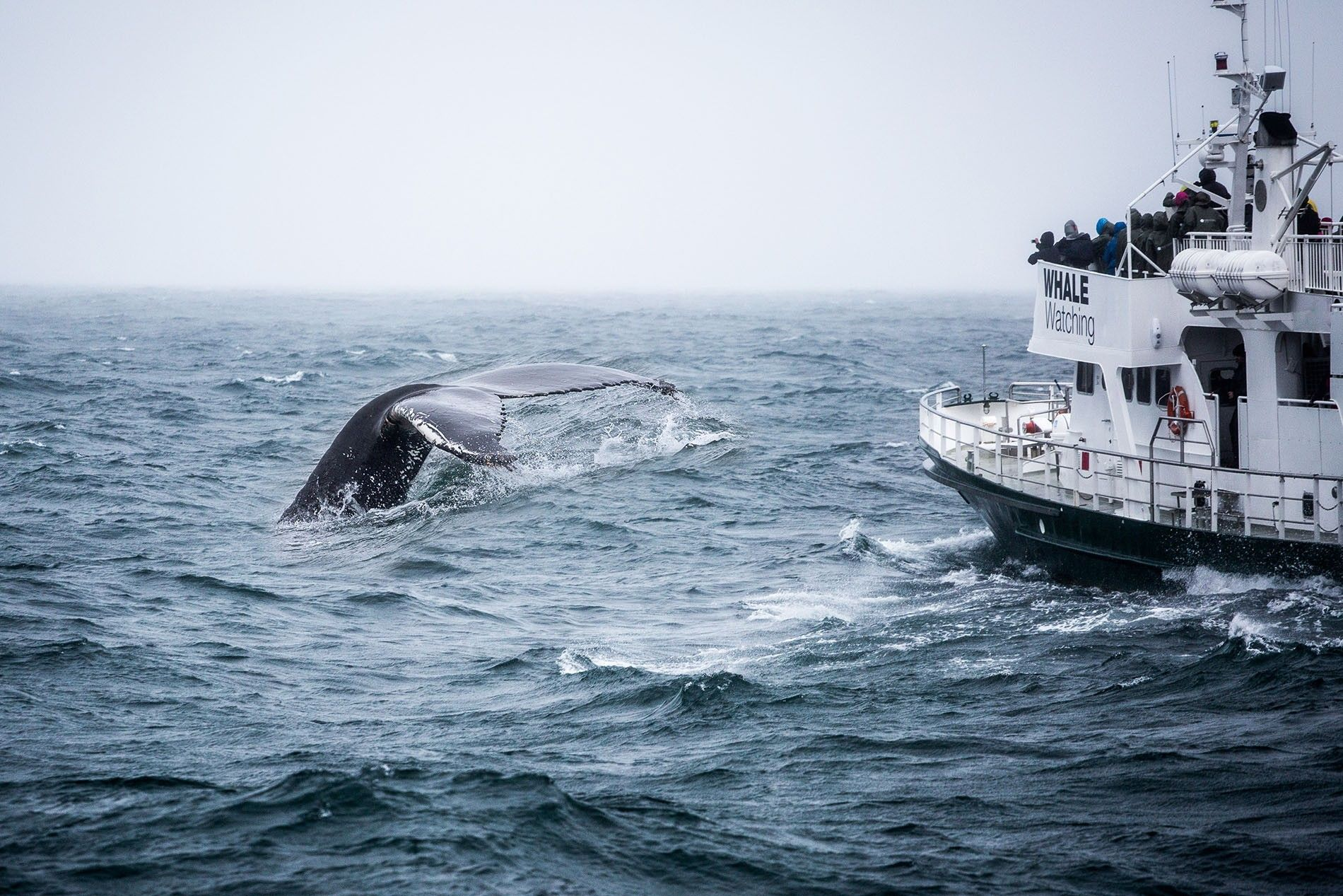 A humpback whale's tail in the water beside a boat.