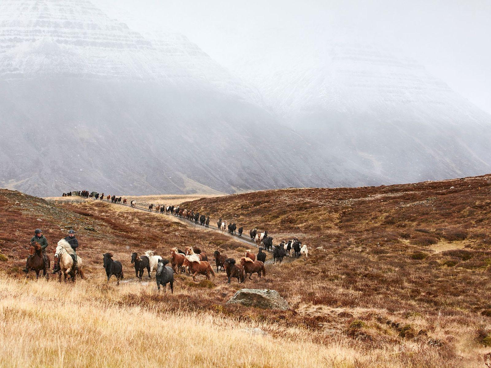The annual Laufskálarétt horse round up inIceland's Kolbeinsdalur Valley.