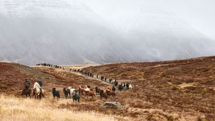 Photo story: the autumn ritual of wild horse herding in Iceland's Kolbeinsdalur Valley