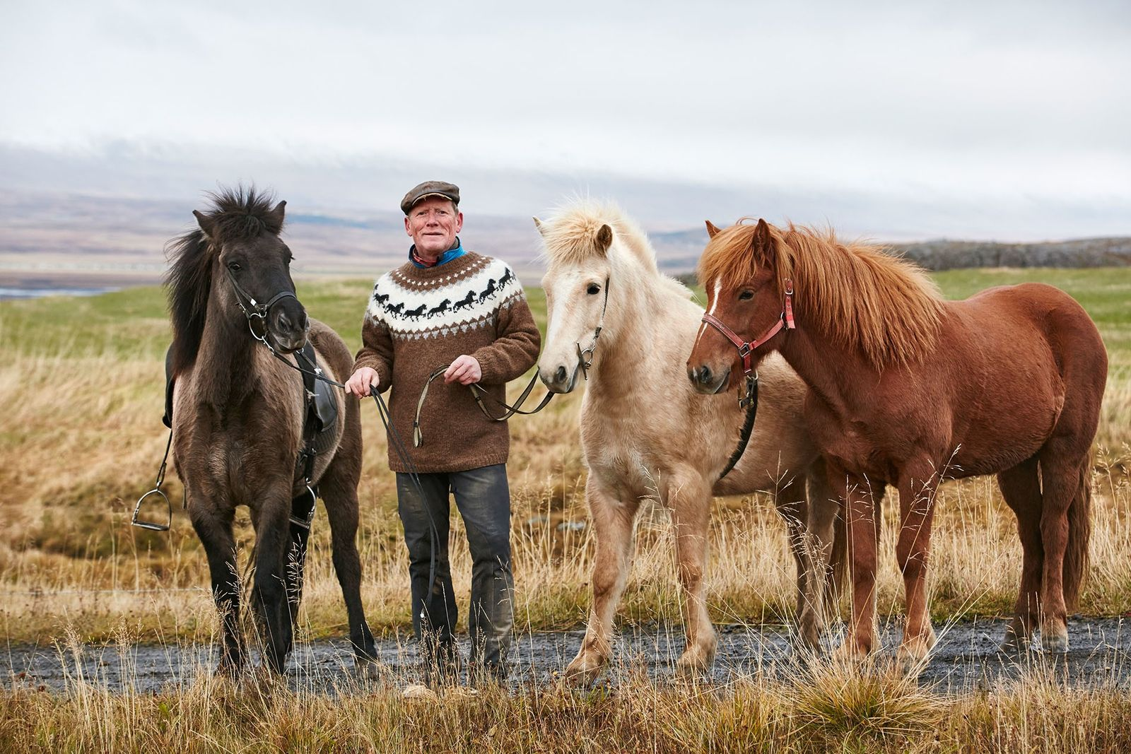 Horse breeder Magnus Andresson and his geldings.