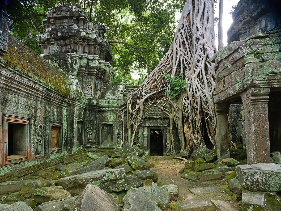 Ta Prohm Temple: Siem Reap, Cambodia