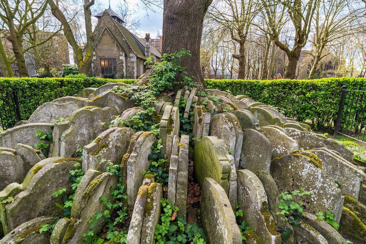 Hardy Tree: London, England