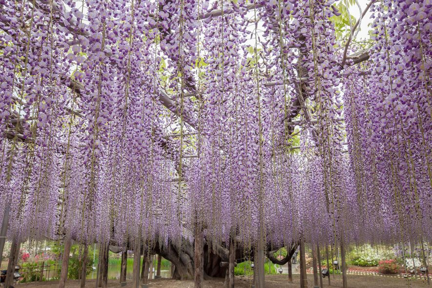 19 iconic trees around the world