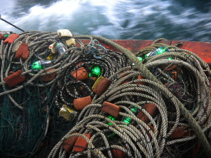 114 fishing nets with LED lights at every 10 metres were deployed in studies done off ...