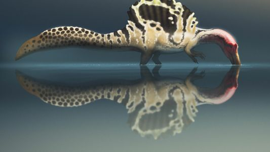 Did the 'river monster' Spinosaurus hunt like a stork?