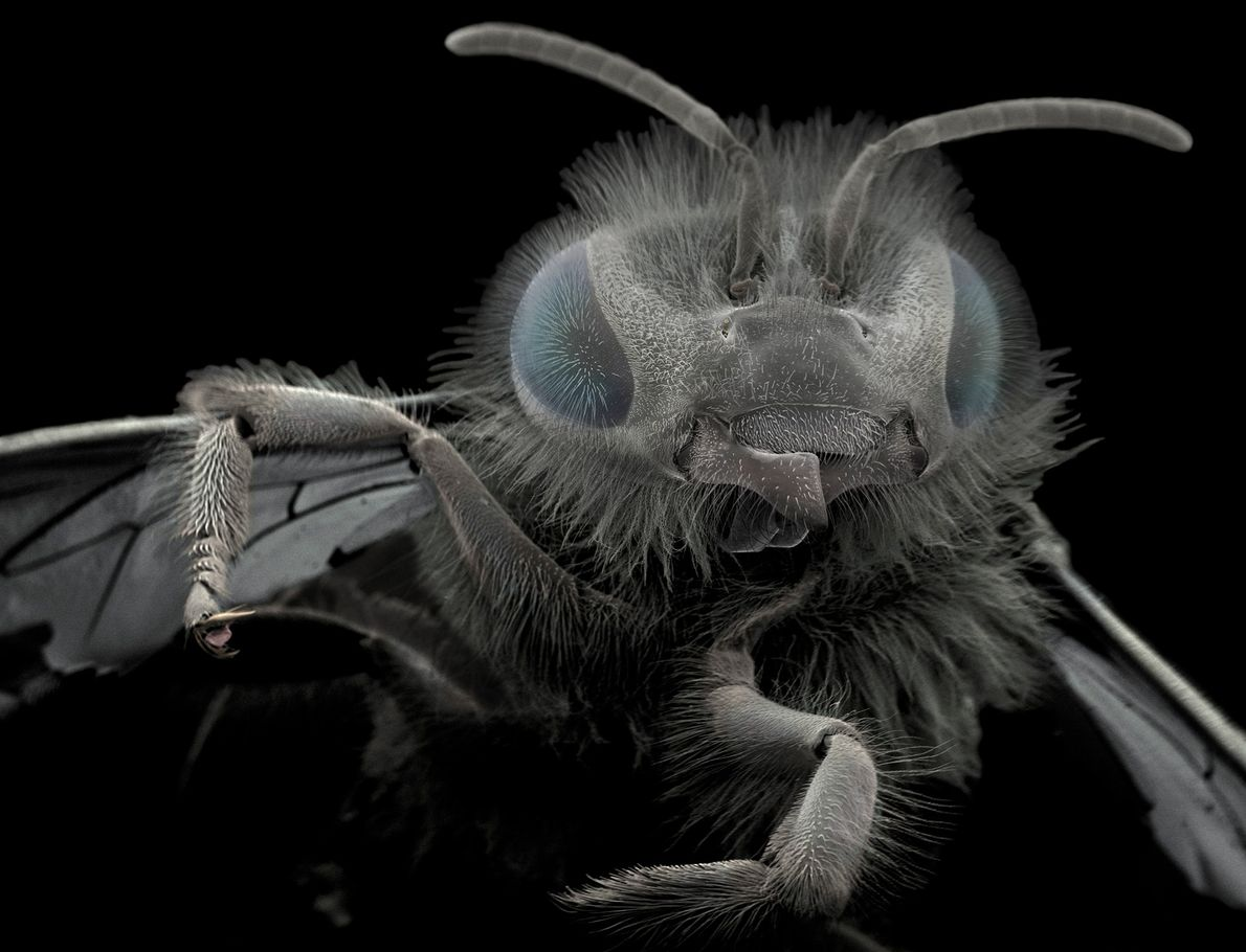 Wiik-Nielsen found this bee in her garden. The structures at the base of its head are ...