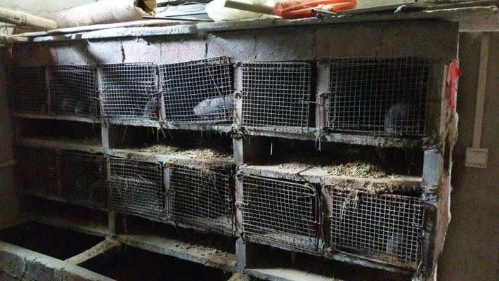 wildlife-farm-china