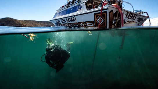 A member of the research team dives into Lake Titicaca, which straddles the border of Bolivia ...