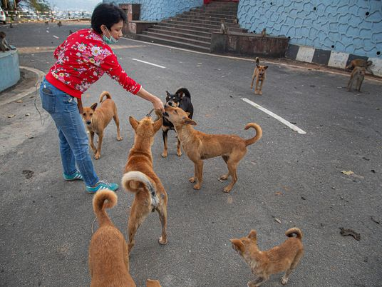 Amid the world's strictest lockdown, people who feed stray dogs are now deemed essential