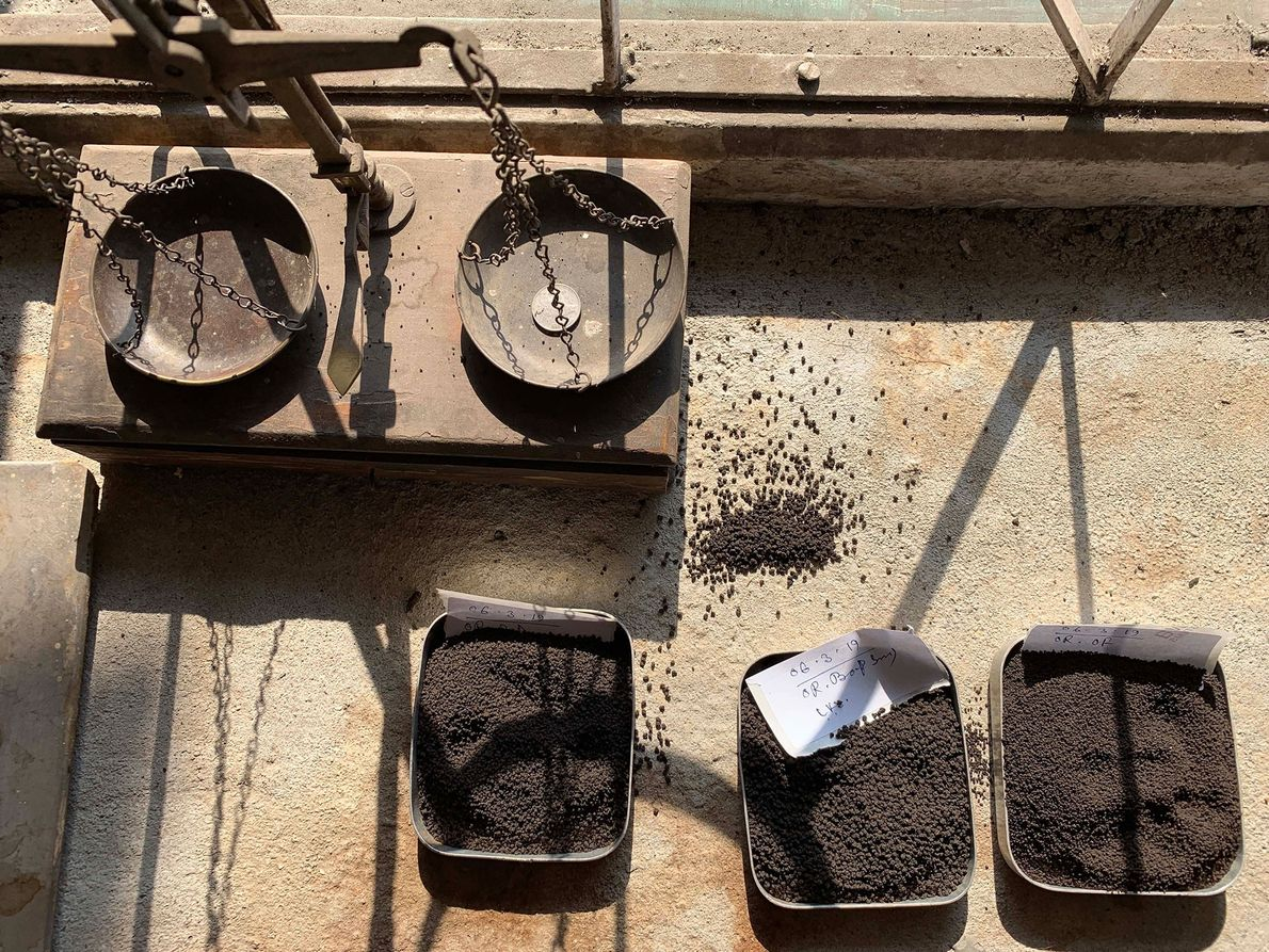 Teas await weighing and grading at the Looksun plantation, in West Bengal.