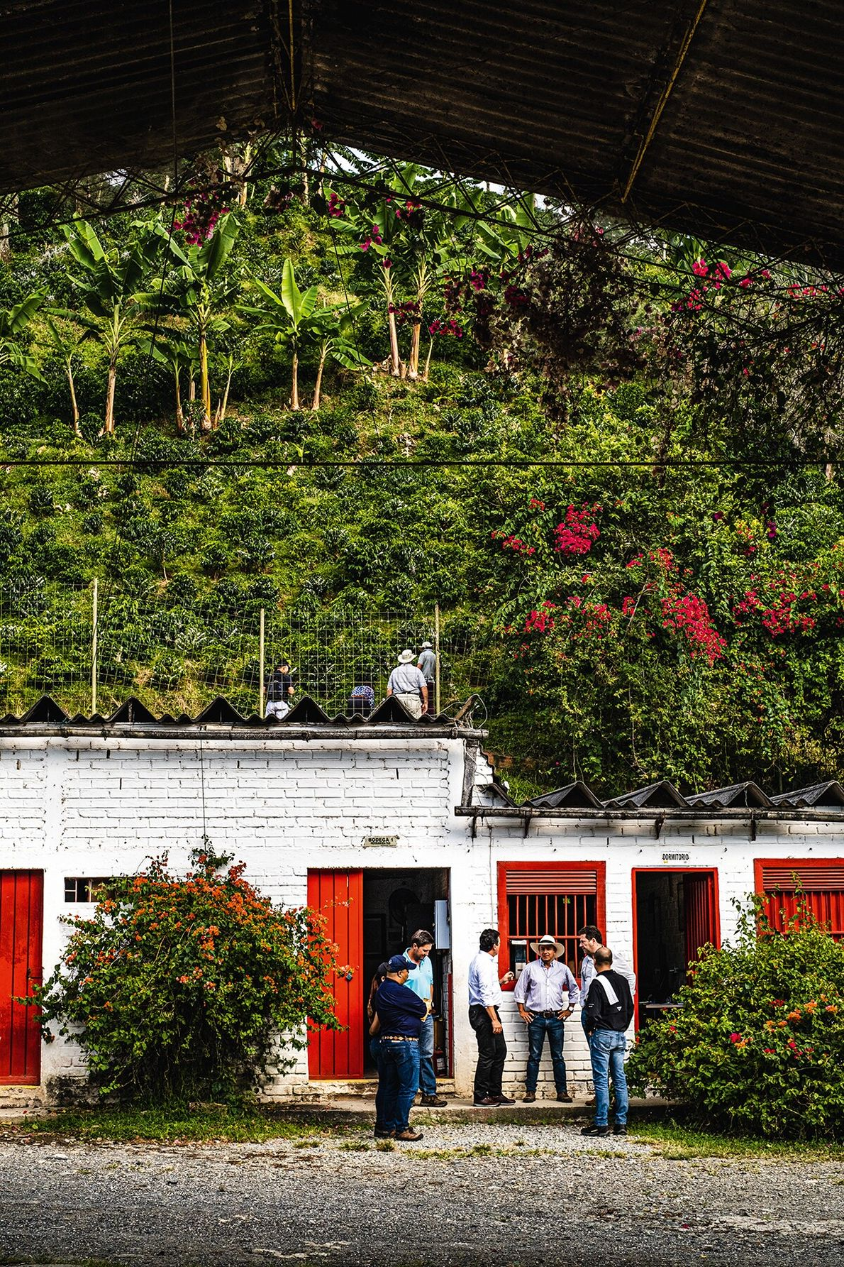 Many plantations welcome visitors, who come to learn about the growing process.