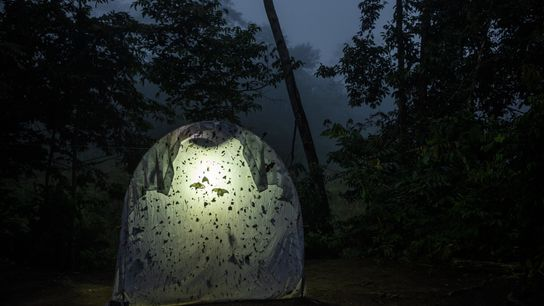 A backlit sheet collects night-flying insects at a field station in Ecuador.