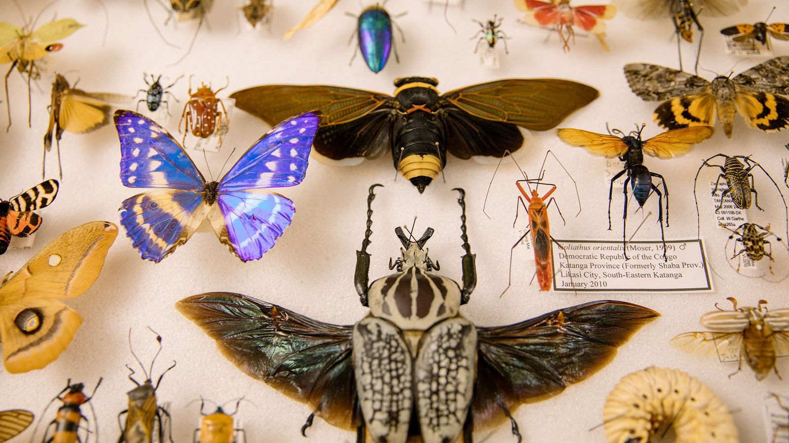 Royce Cumming—one of dozens of vendors selling preserved insects at the Natural History Museum of Los ...
