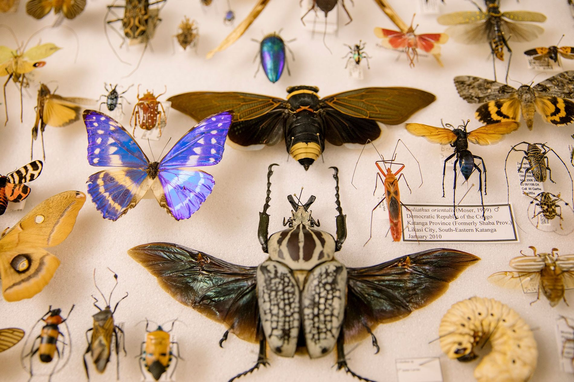 <p>Royce Cumming—one of dozens of vendors selling preserved insects at the Natural History Museum of Los …