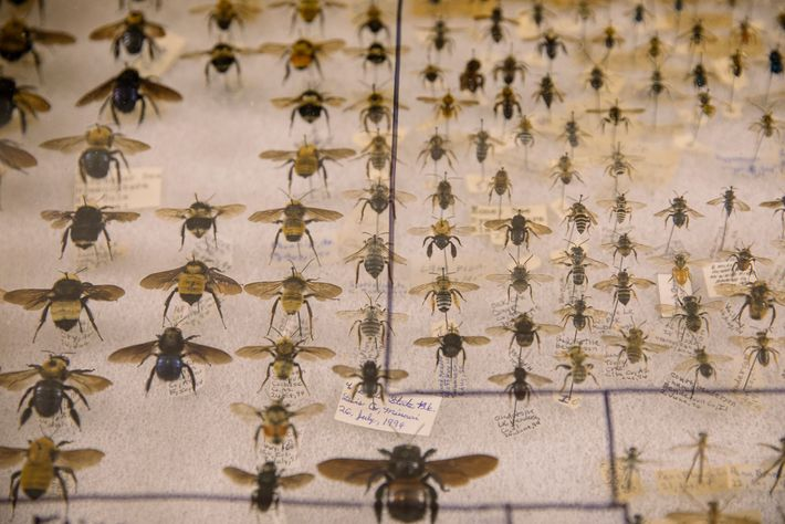 Some people even collect preserved bees. Plenty are on show at the Bug Fair.