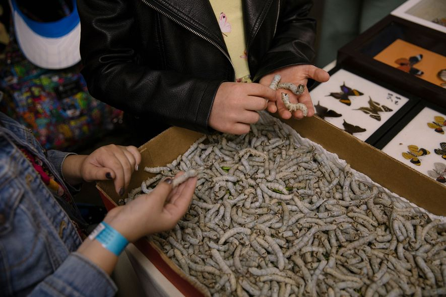 Silkworms draw crowds at the Bug Fair. They aren't the only live animals for sale: Fairgoers ...