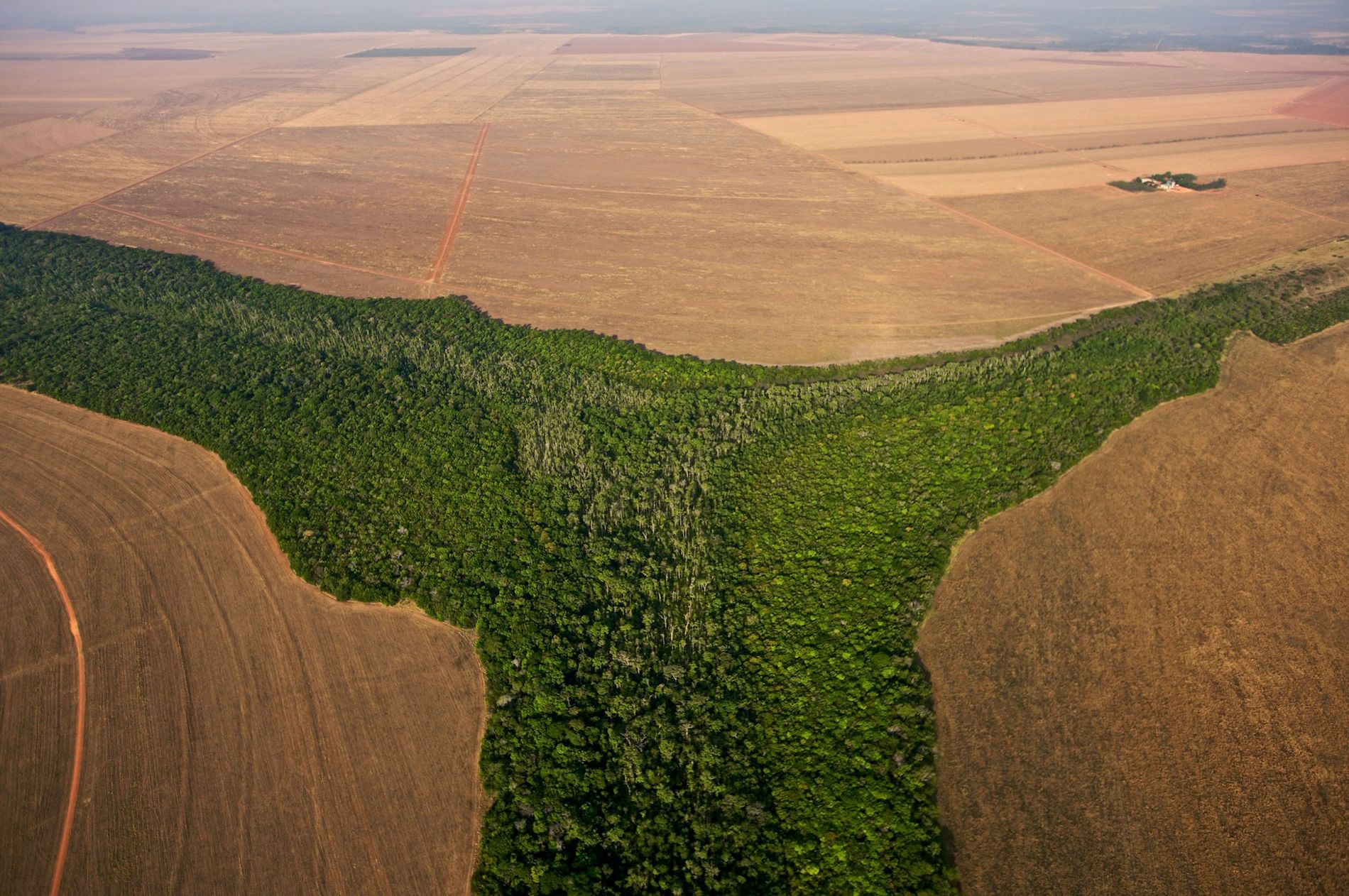 Brazil is one of several key countries where deforestation must be limited in order to stave off global warming, a new international report says.