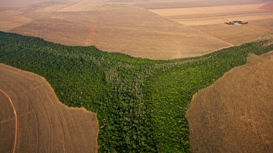 Brazil is one of several key countries where deforestation must be limited in order to stave ...