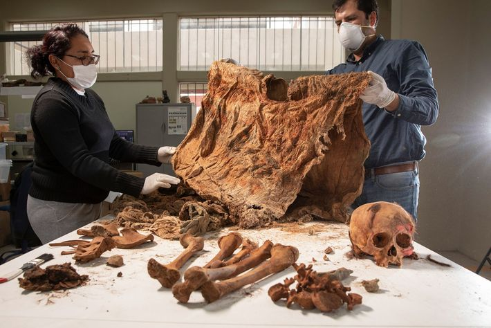 Archaeologists unwrap a child sacrifice from the mass burial at the Pampa La Cruz site in ...
