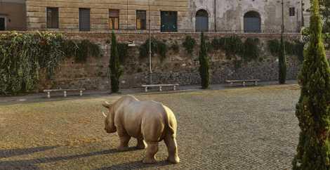 Rome: Wild rhinoceros