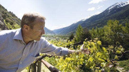 Exploring Valle d'Aosta's vineyards. Image: Roberto Taddeo