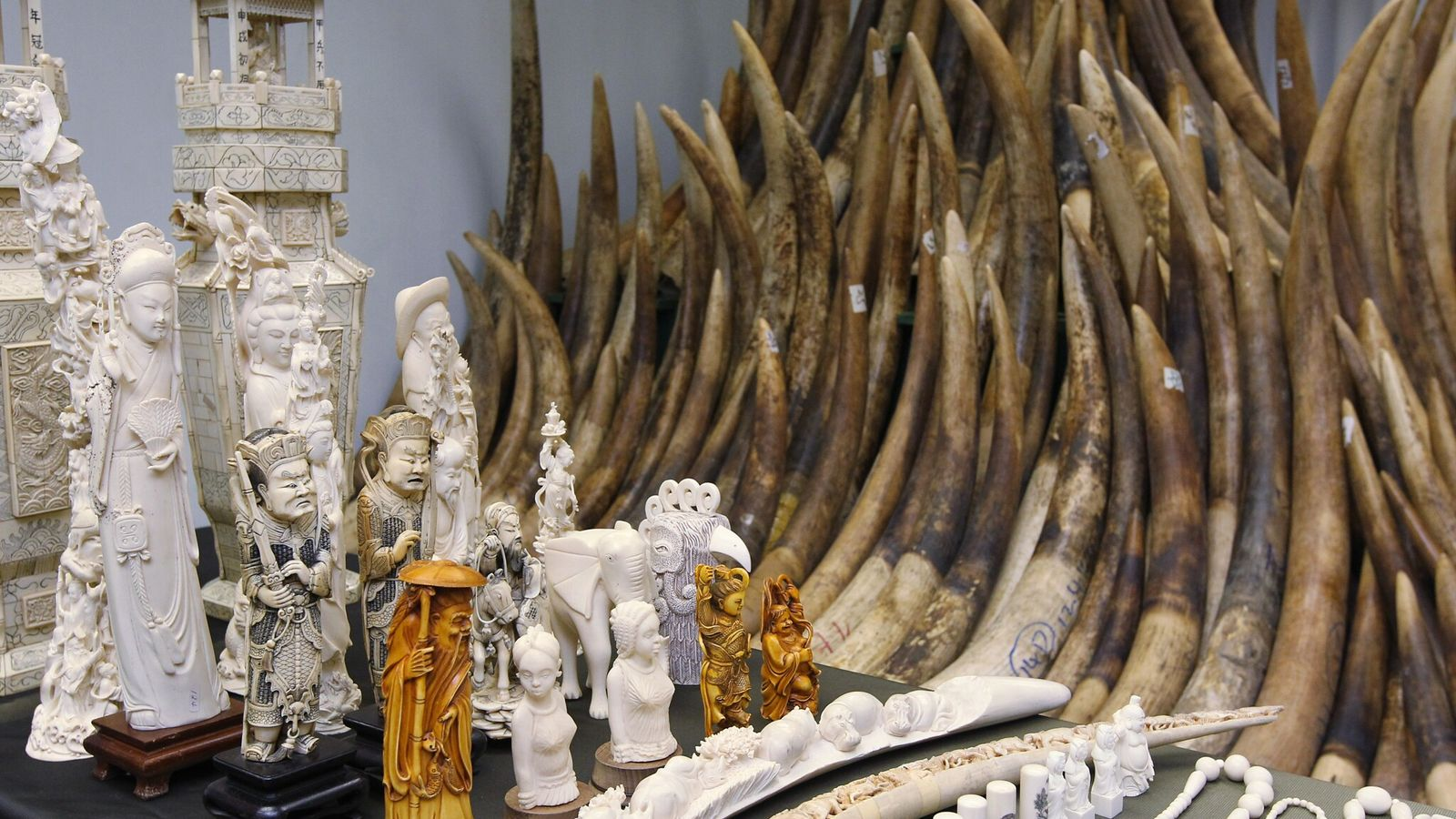 Illegal ivory from elephants, rhinos, and other animals is in demand for the production of carved ...