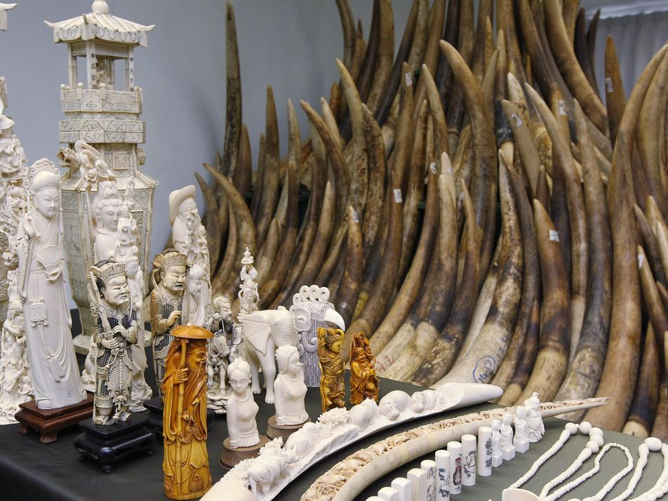 The black-market trade in wildlife has moved online, and the deluge is 'dizzying'