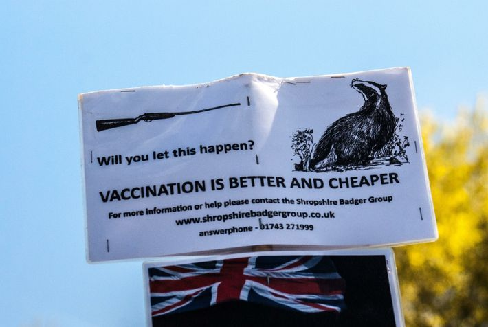 The comparable cost of the cull vs vaccination has been the target of protest, as has the ...