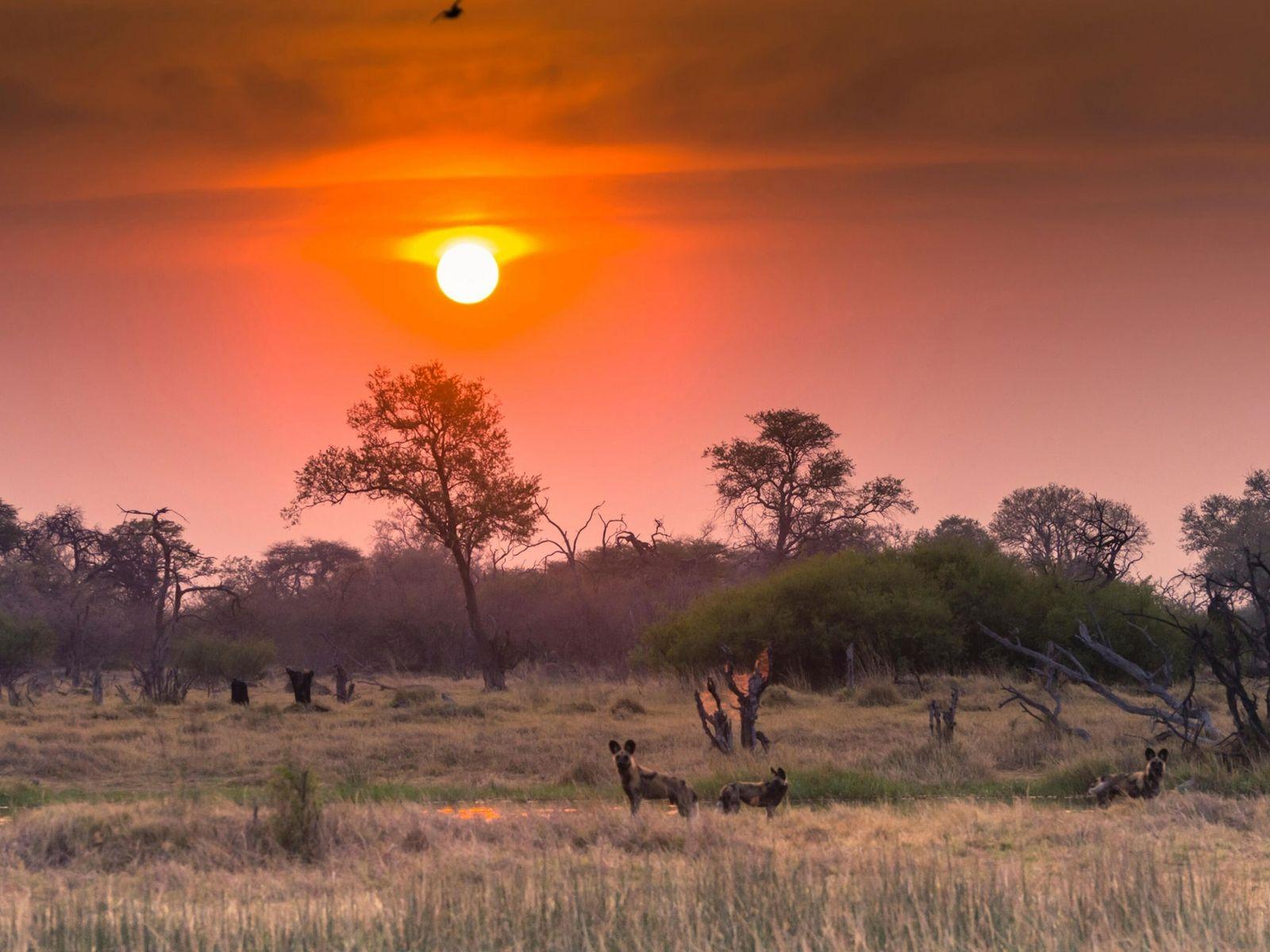 Okavango-pit-1