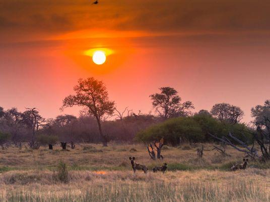 Test drilling for oil in Namibia's Okavango region poses toxic risk