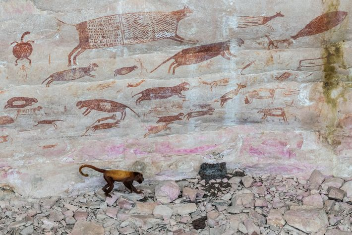 Scientists have calculated that the paintings of jaguars and other animals in Chiribiquete are some 20,000 ...
