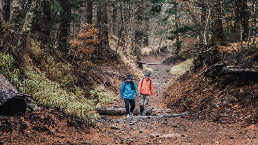 Pilgrimages and peaks: how to find the right hike for you in Japan